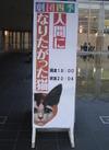 20080914nekokakegawa