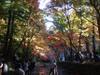 20081129okuni1