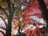 20081129okuni2