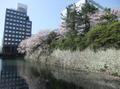 2010shizuokamaturi2